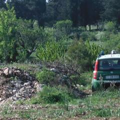 terreno sequestrato dai Carabinieri forestali