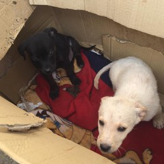 Richiesta di intervento per due cuccioli abbandonati