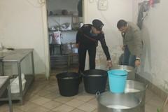 Condizioni igienico - sanitarie non idonee, sigilli ad un caseificio