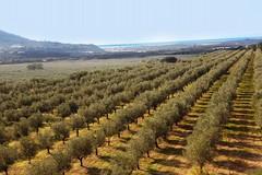 Cambiamenti climatici: Puglia a rischio desertificazione, si perde un litro di acqua su due