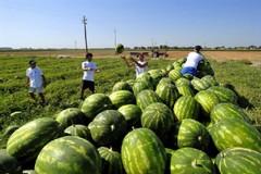 All'Italia la leadership mondiale nei mercati contadini