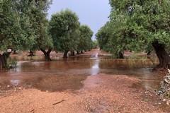 Coldiretti, con maltempo danni nelle campagne per milioni