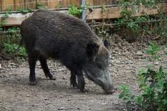 Coldiretti preoccupata per rinvio disegno di legge sulla fauna selvatica