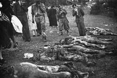 Giorno del Ricordo, per non dimenticare le vittime delle Foibe