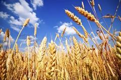 """Crisi agricola, Rustico: """"Necessarie nuove idee e maggiore organizzazione tra i produttori"""""""