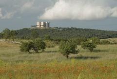 Manutenzione e riforestazione dei parchi in Puglia: siglato protocollo