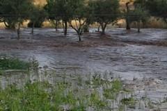 Scoppiate tubature a Minervino, campagne inondate dall'acqua