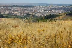 Parco nazionale dell'Alta Murgia: il Sindaco di Corato Mazzilli, nominato vice presidente