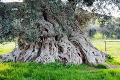 In Puglia è allarme agromafie