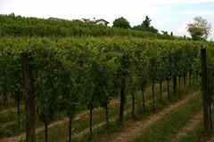 """L'agricoltura e i suoi prodotti: convegno nella masseria """"Terre di Traiano"""""""