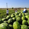 Alla Puglia il primato negativo di peggior consumatrice di frutta e verdura
