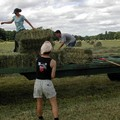 Lavoro in agricoltura, calano gli infortuni in Puglia -11,16%