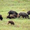 Approvata la legge regionale sui danni da fauna selvatica