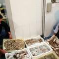 La Guardia Costiera passa al setaccio i ristoranti e le pescherie della BAT