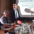 La Burrata di Andria IGP avrà solo latte italiano al 100%. Verso il ripopolamento bovino dell'Alta Murgia