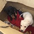 Avv. Vaccariello, ENPA: Richiesta di intervento per due cuccioli abbandonati