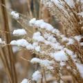 Danni da gelo in agricoltura, Ministero stanzia risorse. C'è anche Minervino