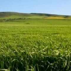 Agriturismi, risorsa per il nostro territorio
