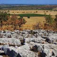Il Parco dell'Alta Murgia riparta dalla sua natura