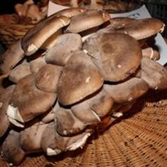 24° Sagra del Fungo Cardoncello, tutto pronto per il 27 e 28 ottobre