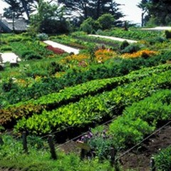 Permacultura: acqua e suolo