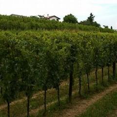 """L'agricoltura e i suoi prodotti: convegno nella masseria  """"Terre di Traiano """""""