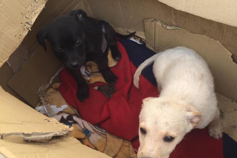 cuccioli di cane abbandonati