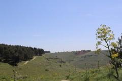 Un logo per la candidatura a Geoparco UNESCO, il concorso del Parco Alta Murgia