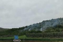 In fiamme bosco di querceto lungo la Sp230