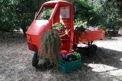 Inaugurato e vandalizzato in 24ore il tre ruote alla memoria di Nicola Piccolo
