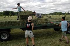 I sindacati chiedono la ripresa della Rete del Lavoro Agricolo di Qualità