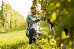 Riparte il PSR Puglia, finanziamento da oltre 55milioni per giovani agricoltori