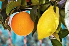 Agropirateria, sul web finti prodotti dell'eccellenza pugliese