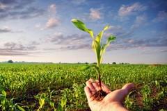 Scorie nucleari in Puglia, si mobilita il settore agricolo