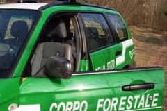 8mila alberi di ulivo tagliati illegalmente nel nordbarese