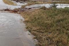 Siccità, Coldiretti: «Servono infrastrutture per non disperdere l'acqua piovana»