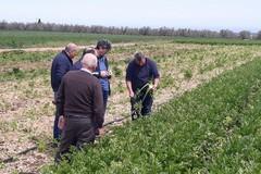 Formazione in agricoltura, «Profilare figure professionali competenti»