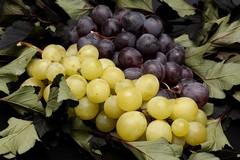 Movimento prodotti vitivinicoli, come accedere all'Ufficio Agricoltura