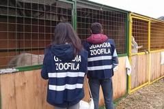 Nuovo corso per Guardie zoofile dell'Oipa Bat: aperte le iscrizioni