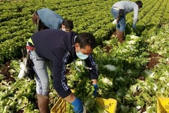 Anp Cia Puglia: «Auspichiamo bonus forfettario per gli agricoltori»