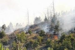 Incendio Bosco di Acquatetta, Tarantini: «Perdita di biodiversità immensa»