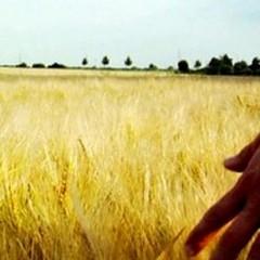 Bando pubblico per l'insediamento dei giovani in agricoltura