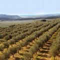 Taglio da 39 milioni all'agricoltura pugliese dal 2020