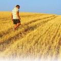 L'agricoltura spegne i sogni dei giovani. Coldiretti: «Bocciate il 75% delle domande PSR»