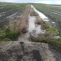 """Agricoltura, Minervino e Bat  """"zone nere """", CIA Puglia: «Territorio senza manutenzione»"""