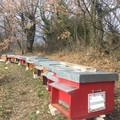 Miele di Puglia, cresce il biologico e l'export in tutto il mondo