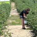 Perdura la zona rossa in Puglia, Coldiretti: «Rafforzare misure di sostegno»