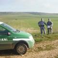 Carabinieri forestali, le attività dei militari a tutela del Parco dell'Alta Murgia