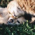Vacanze pet friendly negli agriturismi pugliesi