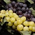Uva da tavola, cala la produzione ma aumenta l'export del 25%